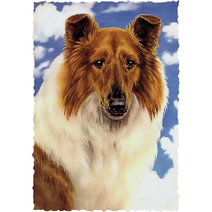 COLLIE T-SHIRT Image