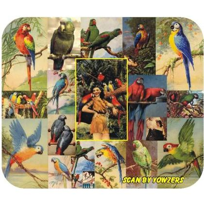 PARROTS of YESTERYEAR Image